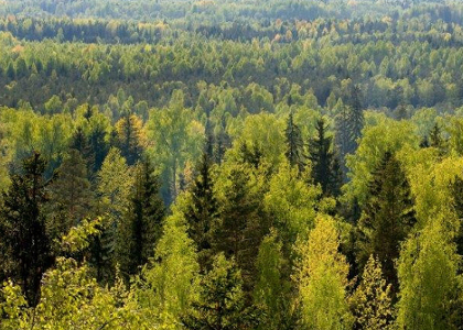 avaleht-metsamaad